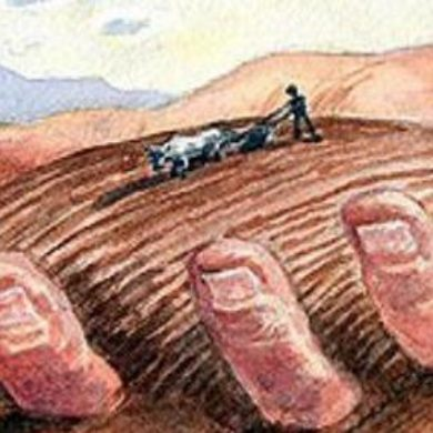 Il fenomeno del Land Grabbing e le lacune nella sua regolamentazione