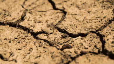 I diritti umani nella crisi ambientale